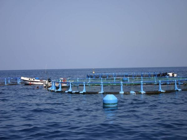 Becas de formación práctica en el área de acuicultura marina
