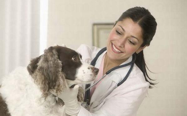 Curso de asistente veterinario