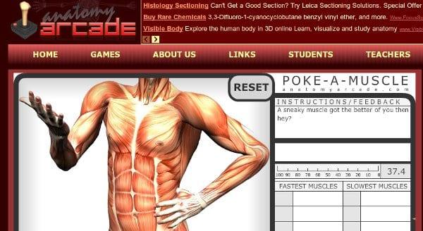 Anatomy-arcade