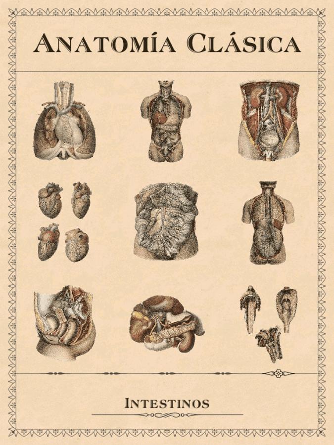 anatomia clasica