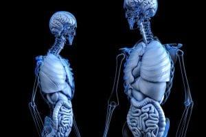 juegos de anatomia del cuerpo humano