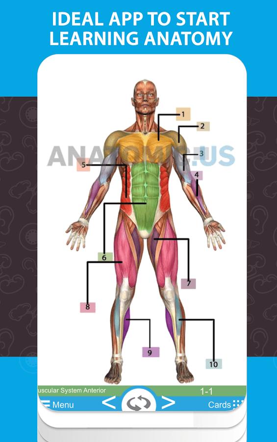 anatomicus