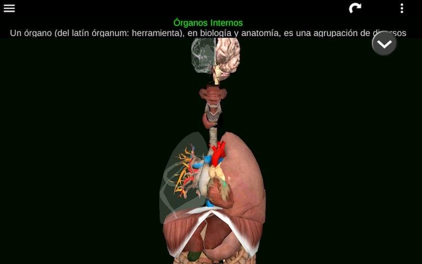 Los mejores juegos de anatomía: aprende el cuerpo humano jugando