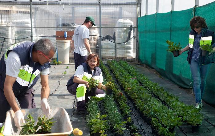 auxiliar de jardines