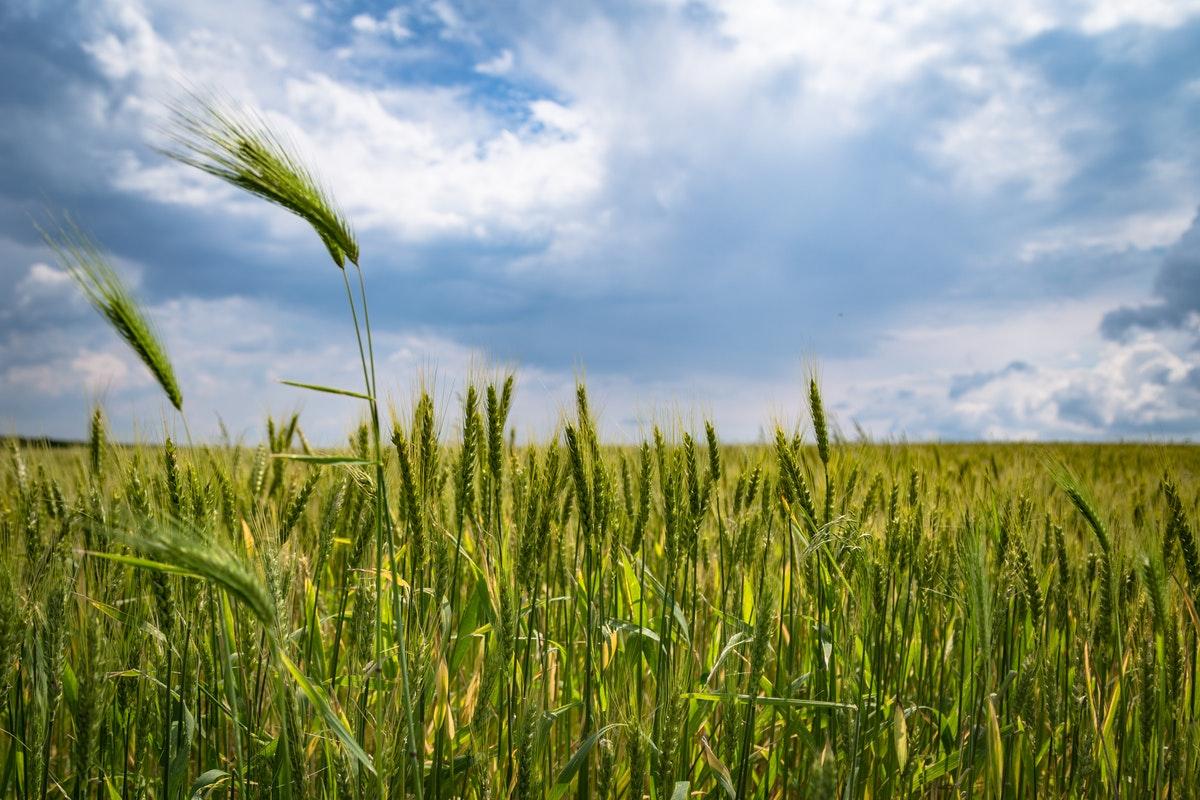 ¿Qué es un agricultor?